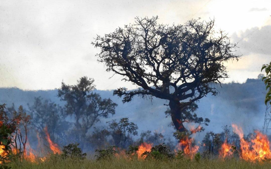 Tempo seco aumenta risco de incêndios