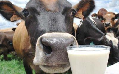 Pecuária leiteira de Caiapônia recebe apoio do Senar +